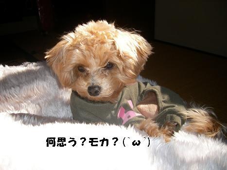 UNI_0343.jpg