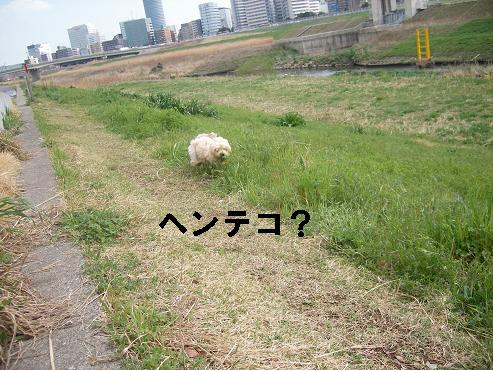 UNI_0821.jpg