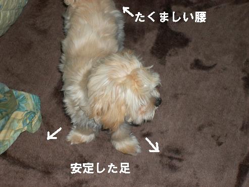 UNI_0911.jpg