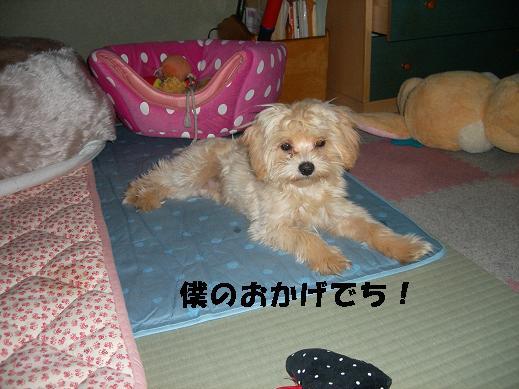 UNI_0923.jpg