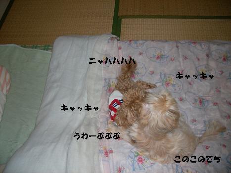 UNI_1001.jpg