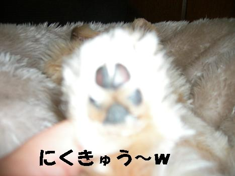 UNI_1249.jpg