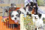 dog-p.jpg