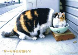 ミーちゃんお食事1