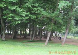 木陰が涼しい芝生の公園