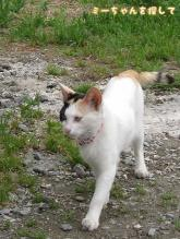 駐車場の三毛猫1