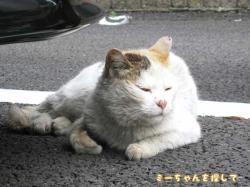 車の下で寝ている猫