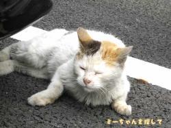 車の下で寝ている猫2