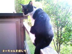 公園猫タマ