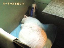 早稲田大学近くのうどん屋さんの飼い猫(寝ている)