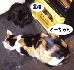 ミーちゃんと黒猫