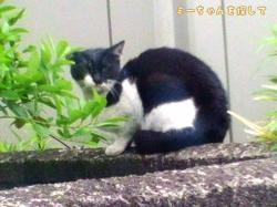 捨てられた猫1