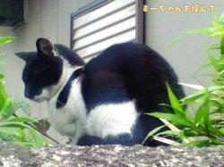 捨てられた猫2