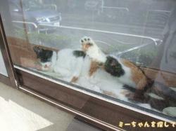 出窓の気持ち良さそうに寝ころぶ猫ちゃん
