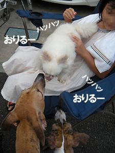 20080822_4.jpg