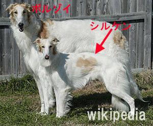 日本ではまだ認定されていないようなのですがボルゾイとウィペットの流れをくむ新種なんだとか。 →詳細はこちら