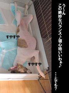 200908007_3.jpg