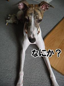 2009096_2.jpg
