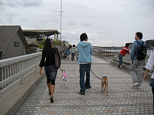 2009516_11.jpg