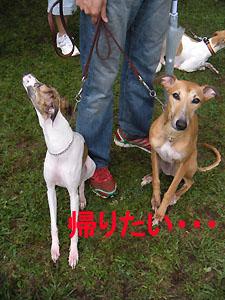 2009531_17.jpg