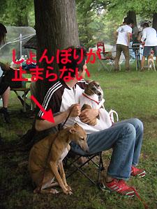 2009531_19.jpg