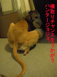 2009612_5.jpg