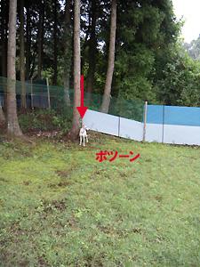 2009912_24.jpg