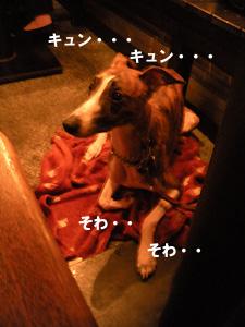 2009912_342.jpg