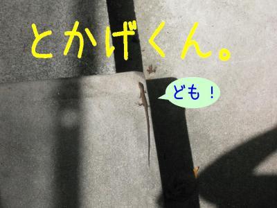 P1050875.jpg