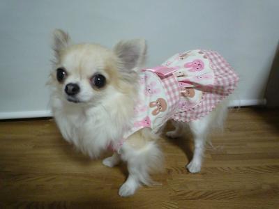 うさぎさんドレス