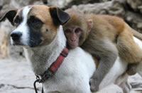 犬猿仲良し