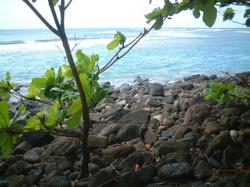 hula kauai