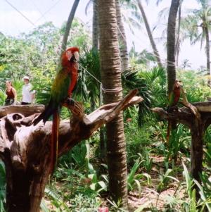 シェルハ鳥