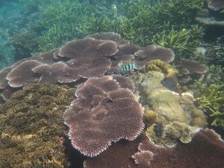 tunabay coral 2
