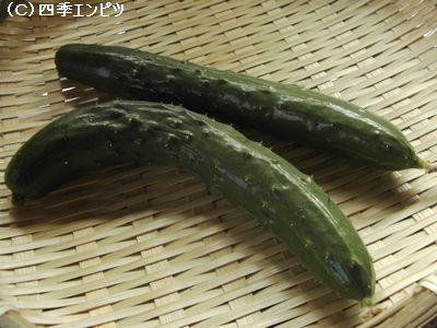 キュウリ 8月13日 収穫