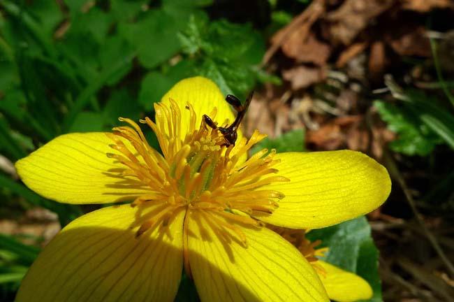 5.17花達と虫達 (42)