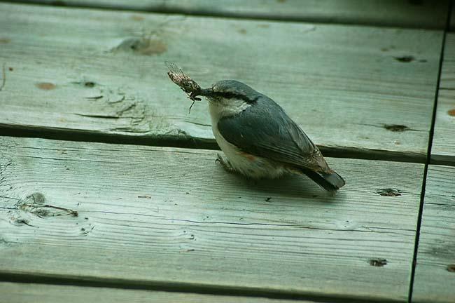 5,28可愛い小鳥 (23)
