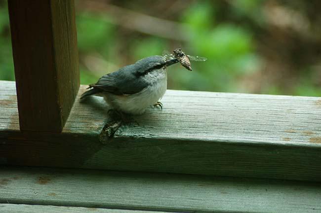 5,28可愛い小鳥 (26)