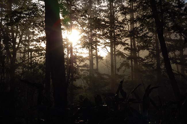 6.10霧の朝 (8)