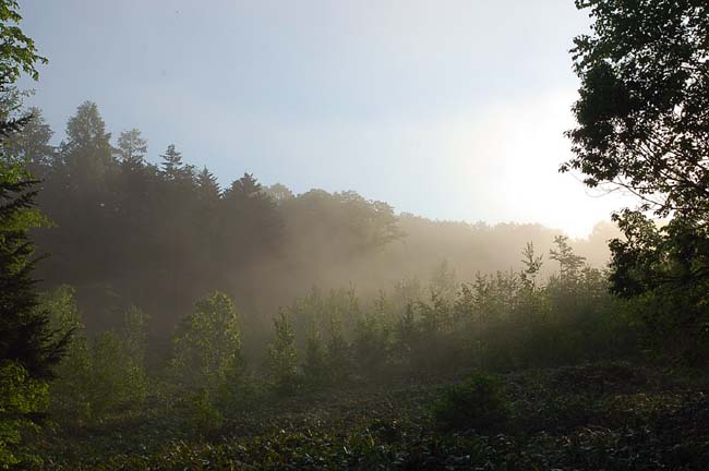 6.10霧の朝 (11)