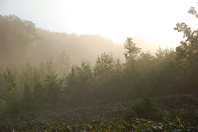 6.10霧の朝 (12)