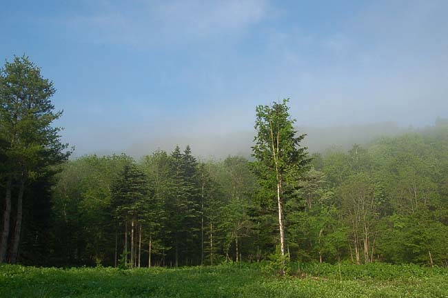 6.10霧の朝 (10)