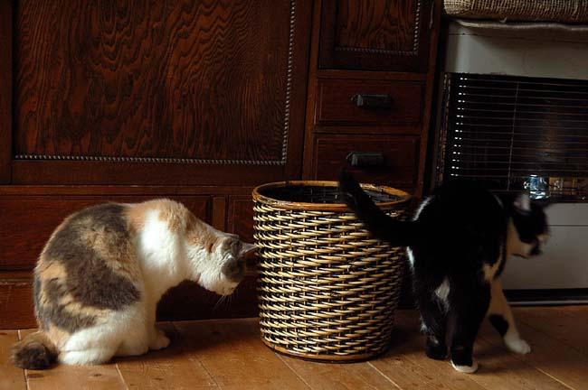猫は好奇心旺盛 (1)