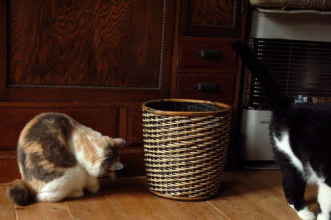 猫は好奇心旺盛 (2)