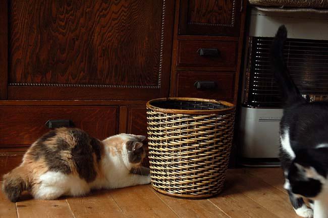 猫は好奇心旺盛 (3)