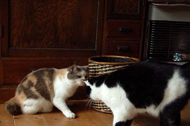 猫は好奇心旺盛 (4)