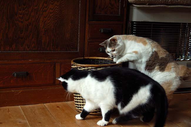 猫は好奇心旺盛 (7)