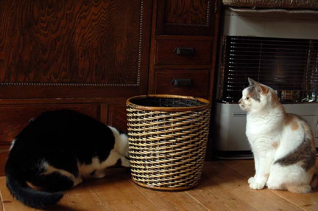 猫は好奇心旺盛 (9)