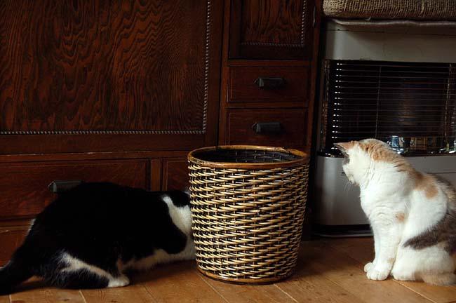 猫は好奇心旺盛 (11)
