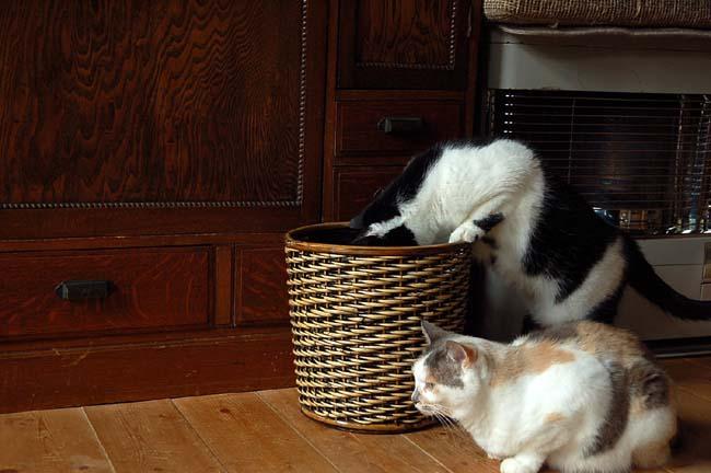 猫は好奇心旺盛 (15)